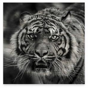 50 x 50cm - Tiger Print